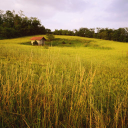 freetoedit campagna summer photography landscape