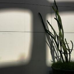 shadow shadows shadowhunters photography shadowplay