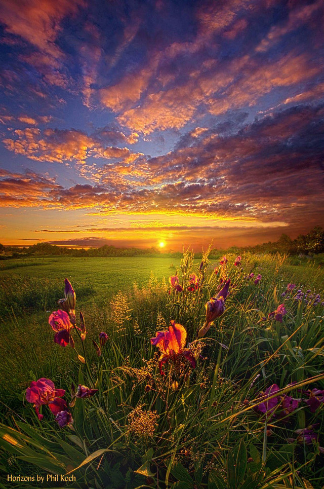 """"""" This Life is a Gift for Everyone """" - Wisconsin Horizons by Phil Koch. #freetoedit #remixit #outdoors #Wisconsin #sunrise #travel #summer2018 #flowers #nature #fineart #spring #springtime"""