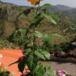 freetoedit flower photography yellow pcyellow