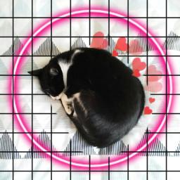 freetoedit cute catsofpicsart