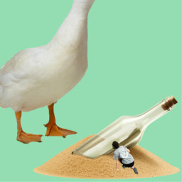freetoedit watchout duck hideandseek happythursday