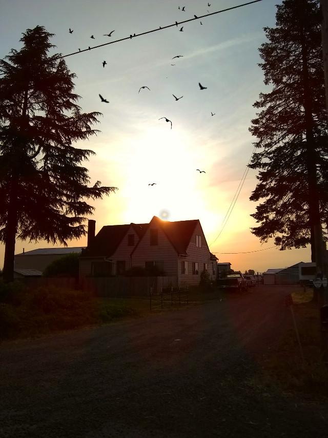 #freetoedit #Thebirds