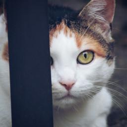 freetoedit pccats cats mycat pcpets