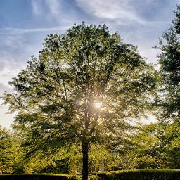 trees tree landscape vertical sunset
