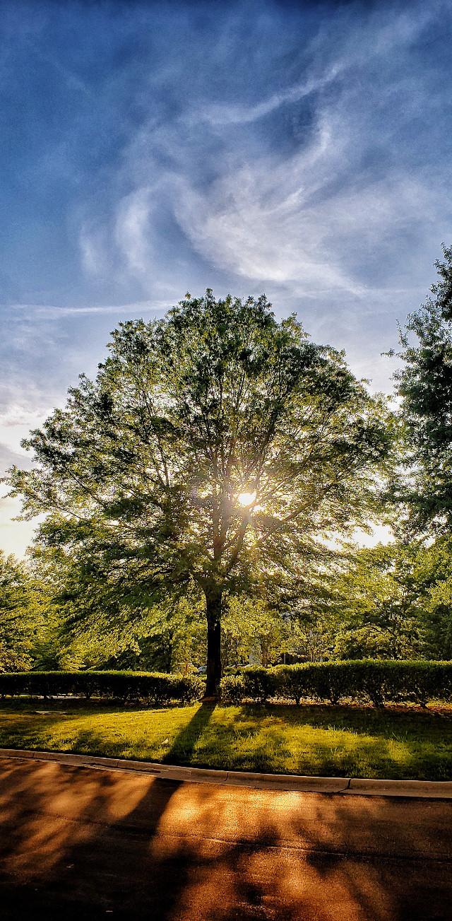 A Warm Goodbye  #trees #tree #landscape #vertical #sunset #sunsetsky #sunsetlovers