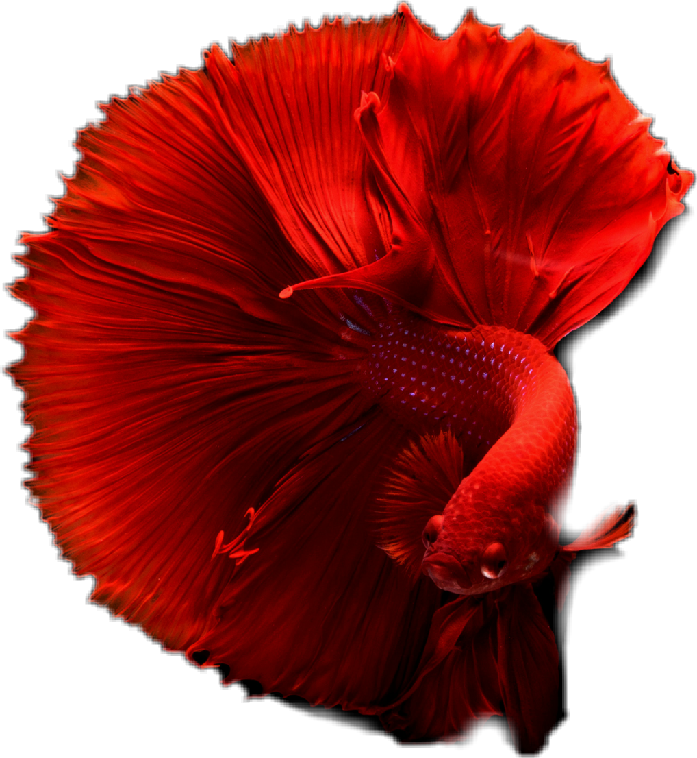 #fish #red