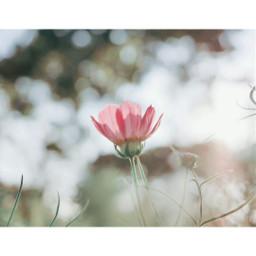 flower red pink flowerphotography flowerpower floral naturelovers nature natural macro adayinthailand