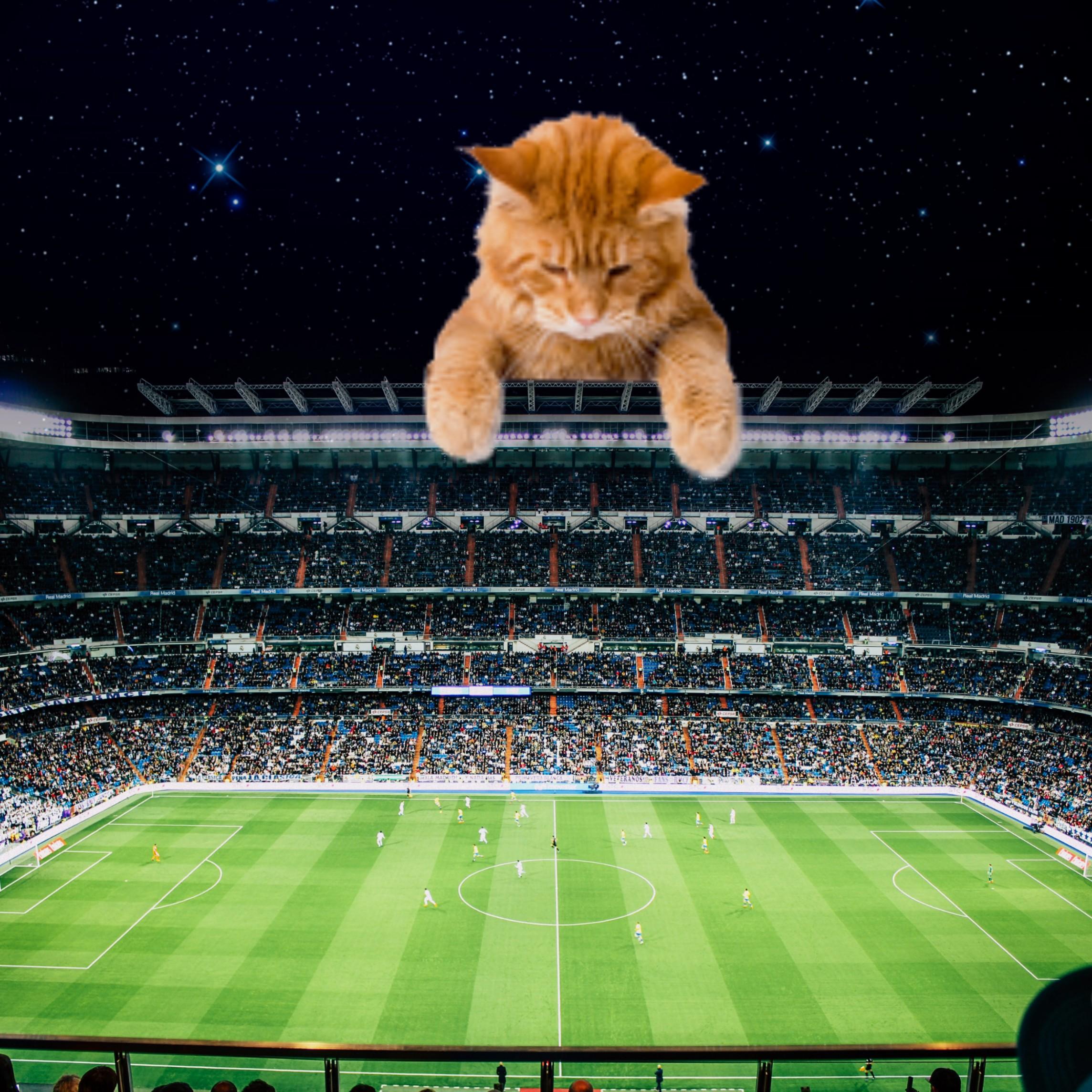 #freetoedit #giantanimals #cat #stadium #football
