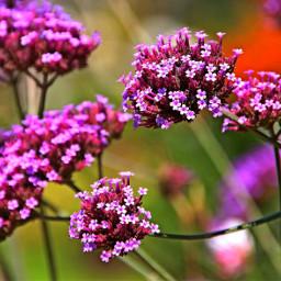 flowers naturephotography freetoedit