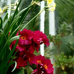 photography macrophotography flowers ireland pcmacro
