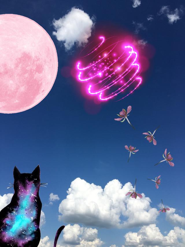 #freetoedit kittys