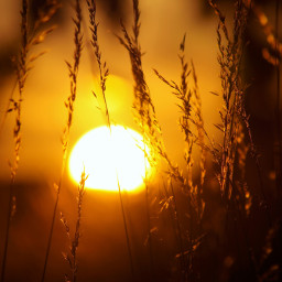 freetoedit sunset silhouette orangecolor nofilter scenicview