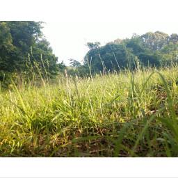 nature grassfield sunnydays