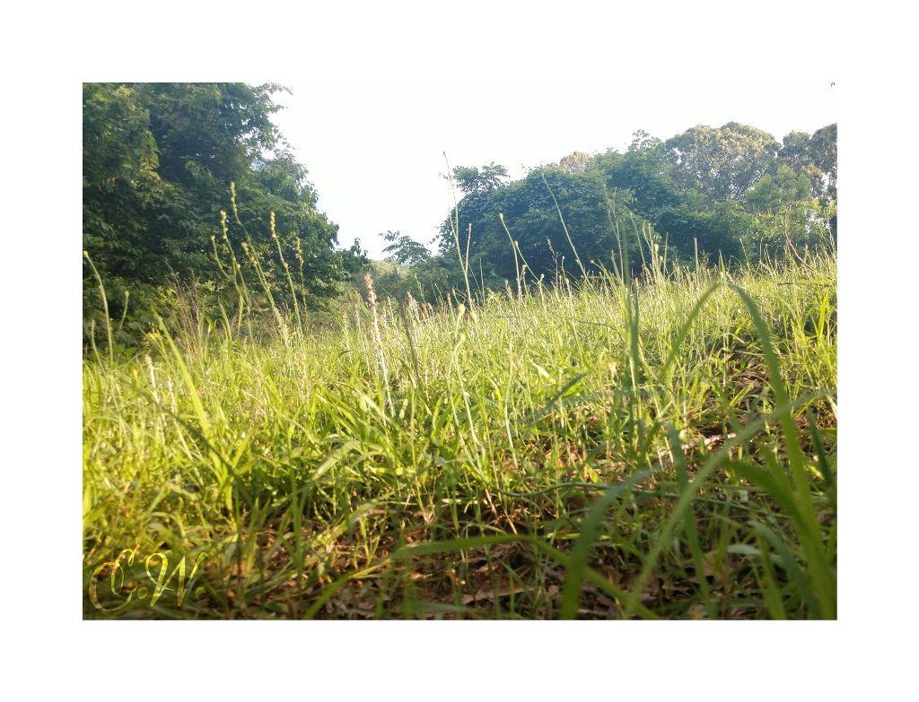 #nature #grassfield #sunnydays