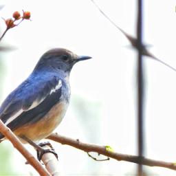 photography bird nature