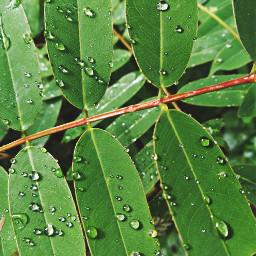freetoedit rainyday naturesbeauty justaclick