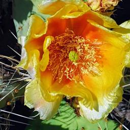 freetoedit cactus plants desertbeauty desertlife