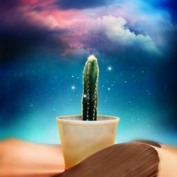 freetoedit cactus dailyinspiration createsomethingneweveryday editz4fun