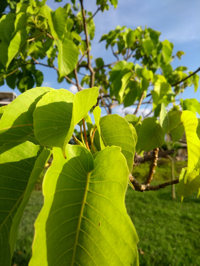 #freetoedit #remixit #nature #naturaleza #naturephotography  #green #leaf  #tree #sky #beautiful #hdr