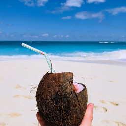 summervibes coconut beach freetoedit