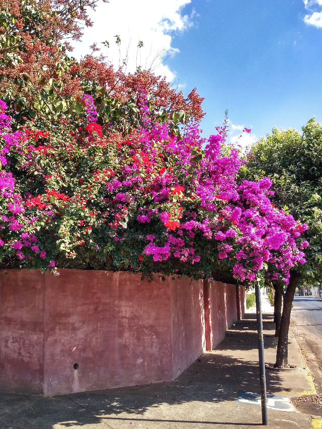 #hdr #colorful #flowers #house #pink #urban