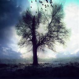 freetoedit doubleexposure treesilhouette