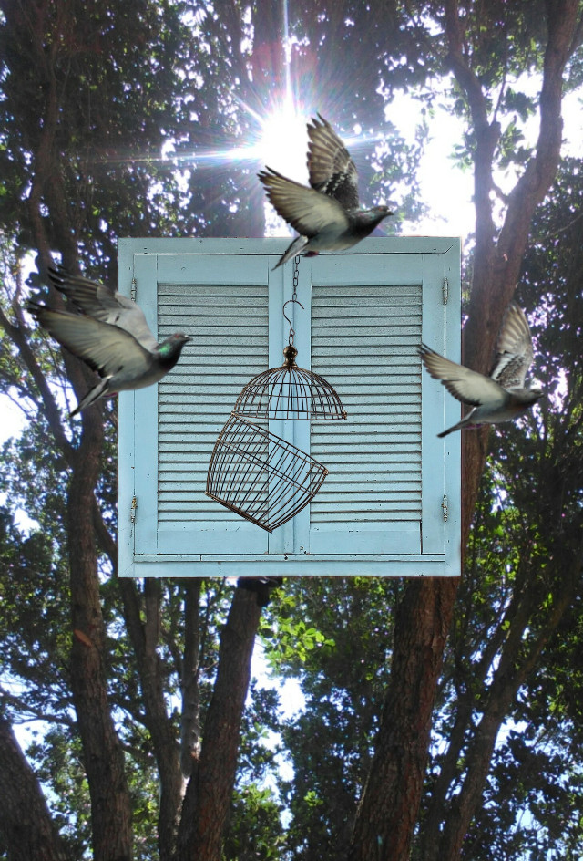 #free #freetoeditchallenge  #window  #madewithpicsart #friendsstickers #trees #sunrays