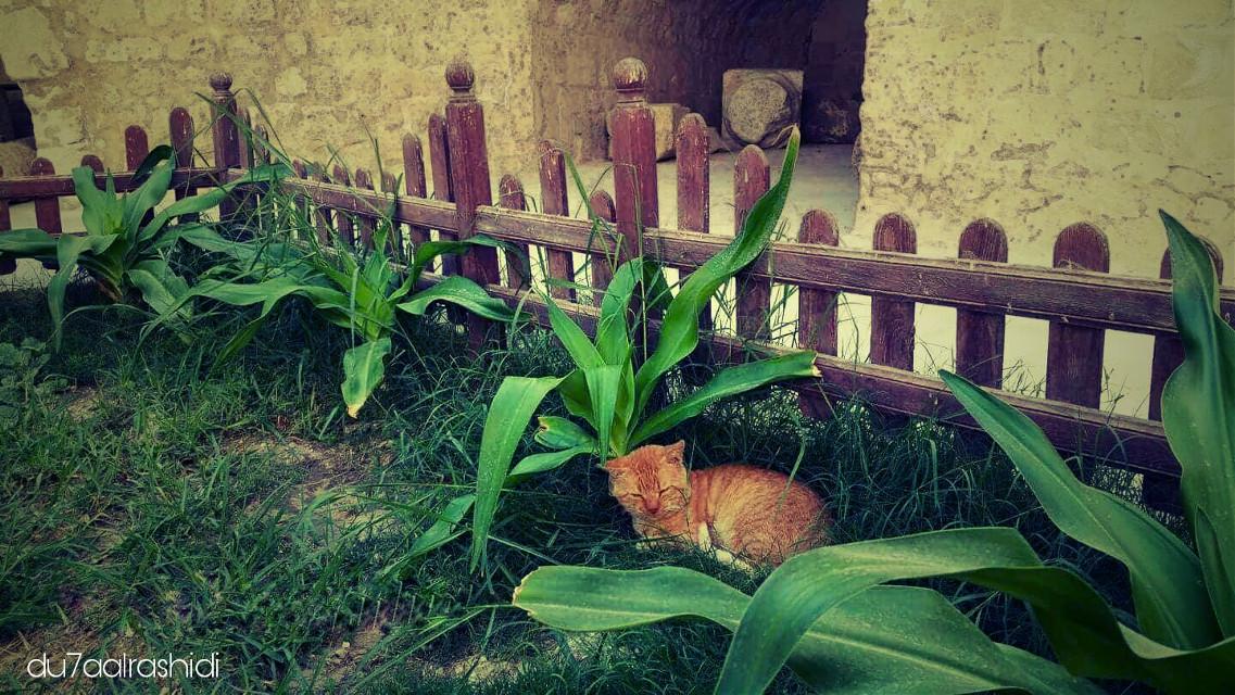 cat : am out of order .. plz do not disturb  #cat #pastel #nature #pets & animals #love #sleepy #resting #effect #editbypicsart #green #castle