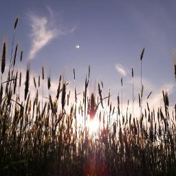 nature clouds sky blue bluesky freetoedit