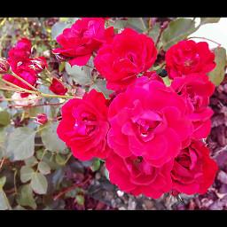 flower garden red