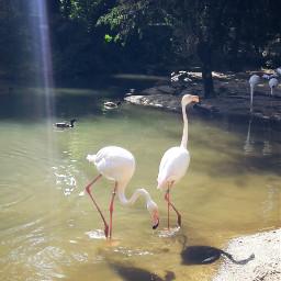 filamingo hayvanatbahçesi zoo bursa tatil