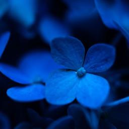flowers nature naturelover macrophotography macro