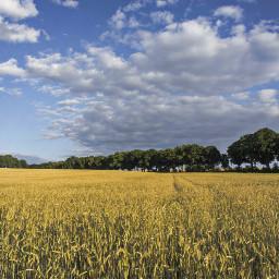 landschaft landscape corn field sky freetoedit