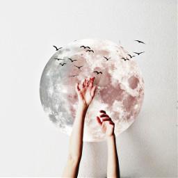 freetoedit moon srcwhitemoon whitemoon