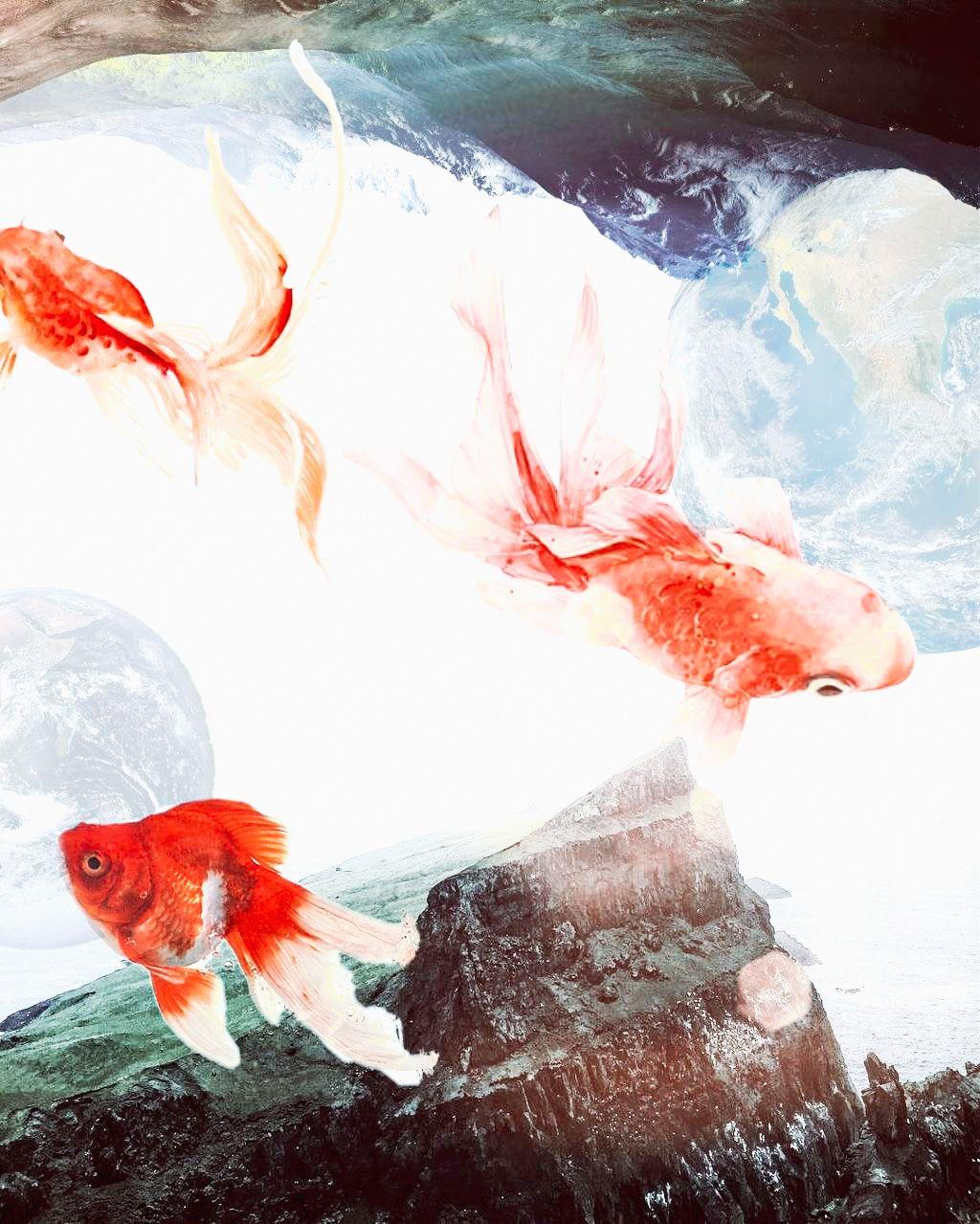 #fish #sea # #freetoedit #fte #remix #remixit #mountain
