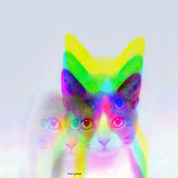 freetoedit cat glitch poparteffect trend