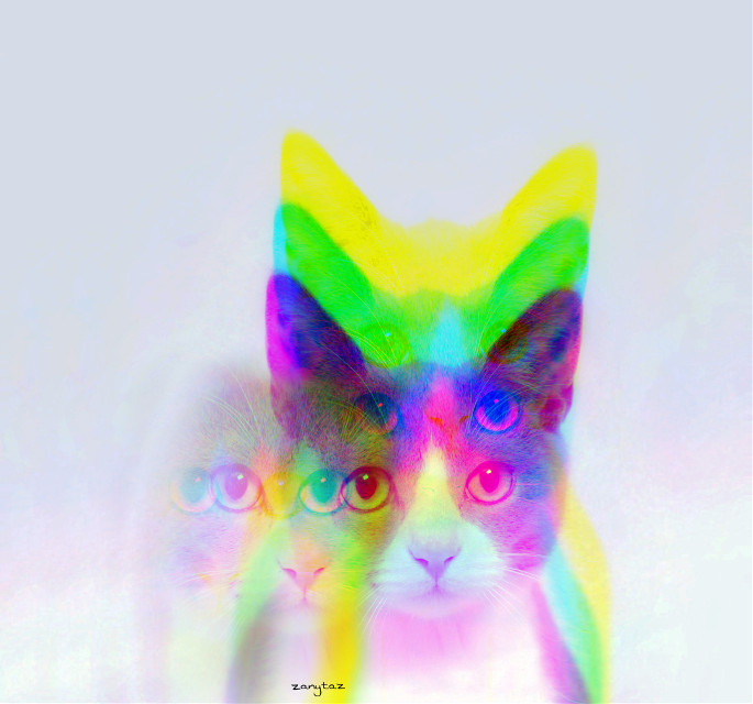 #cat 🐈Giving #glitch a try. #poparteffect #trend of the week. Try it, just for fun. I just did...#freetoedit