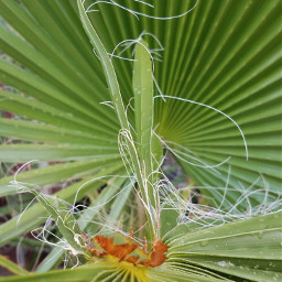 weathered worn nature interesting palmleaves freetoedit