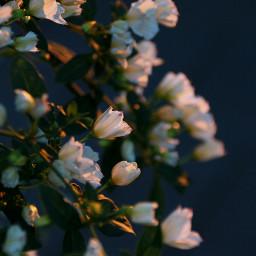 freetoedit flower moods flowerphotography contrast