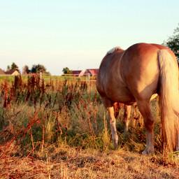 freetoedit myphoto myphotography photography horse