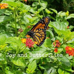 butterfly monarch frommygarden