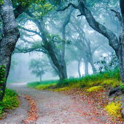 ghostfollowers dontfollowme nature natural fog freetoedit