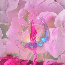 freetoedit pink flowers overlay stars silhouette