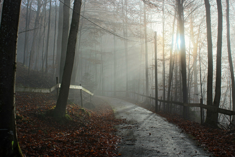 Friends I have Thousands of pictures that I have never posted.. I will share them with you Enjoy! All are free to edit #freetoedit #fall #myphoto #oldphoto #bavaria #fog #mystic