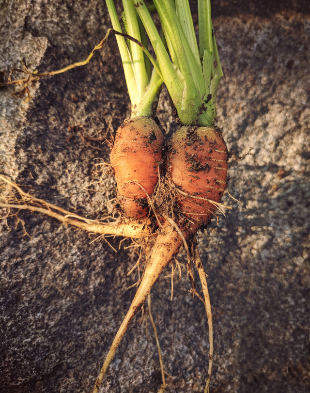 #freetoedit carrot love 💚