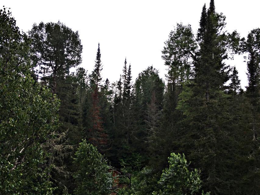 #freetoedit #remixit @picsart #forest #nature #trees