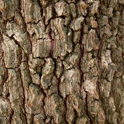 ftesticker photography bark wood tree freetoedit