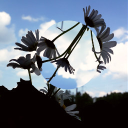 tumblr flowers flowerphotography circleart freetoedit