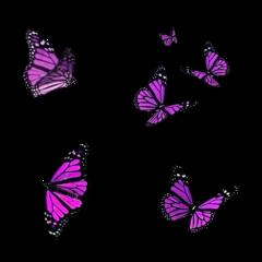 butterflies freetoedit